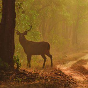 Wilderness Retreats to Escape to in Madhya Pradesh